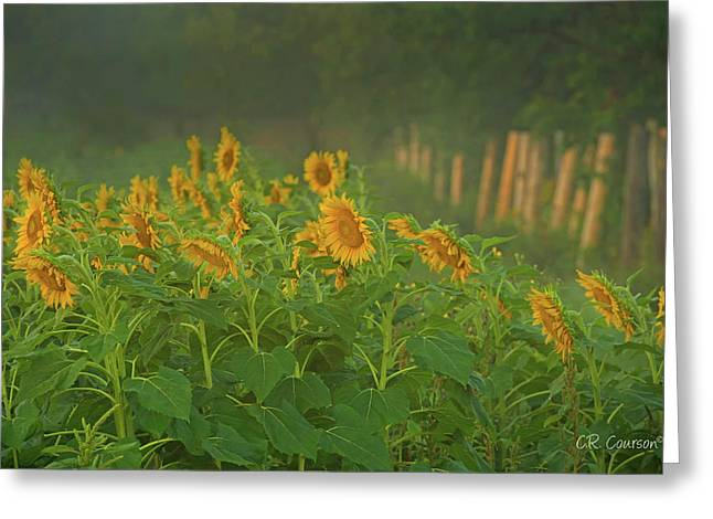 Waking Up Greeting Card by CR Courson