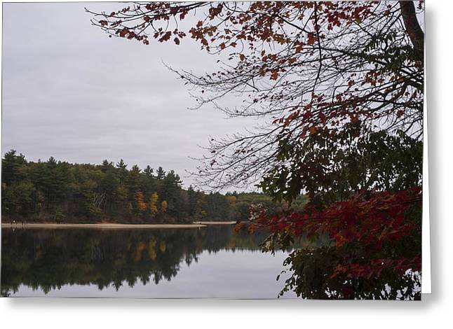 Walden Pond Fall Foliage Le 2aves Concord Ma Greeting Card by Toby McGuire