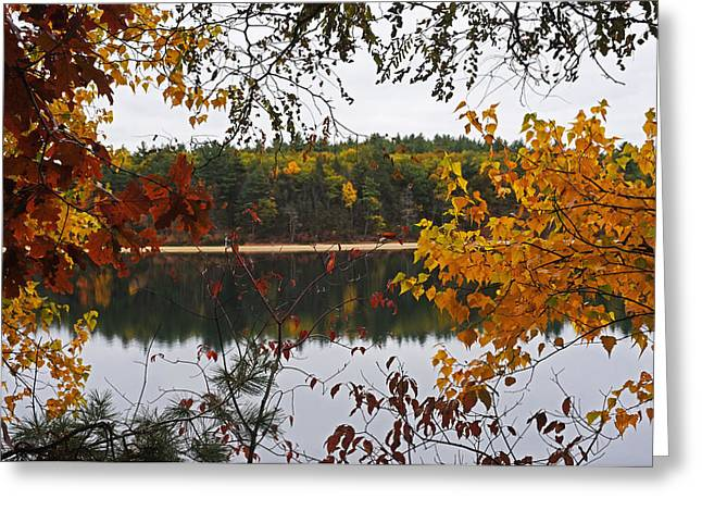 Walden Pond Fall Foliage Leaves Concord Ma Greeting Card by Toby McGuire
