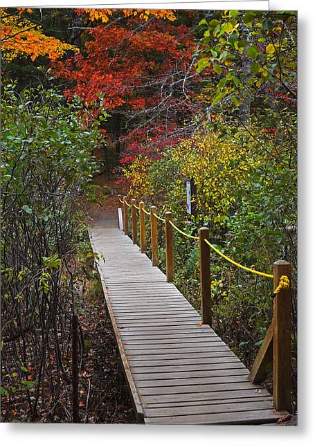 Walden Pond Footbridge Concord Ma Greeting Card by Toby McGuire