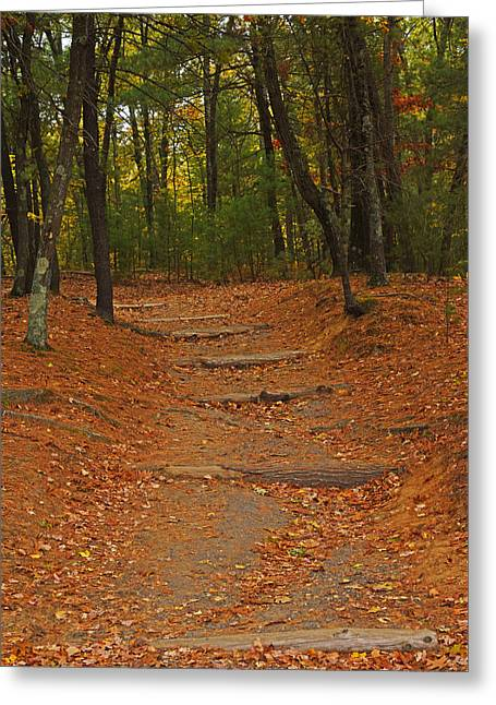 Walden Pond Path Into The Forest Greeting Card by Toby McGuire