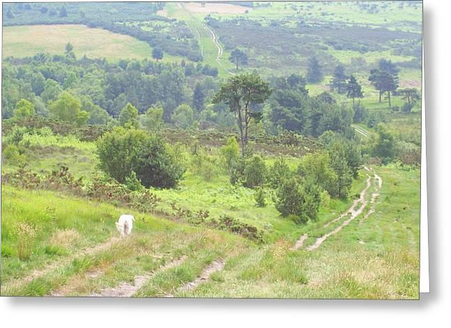 Walk In Ashdown Forest Greeting Card by Hilary Burt