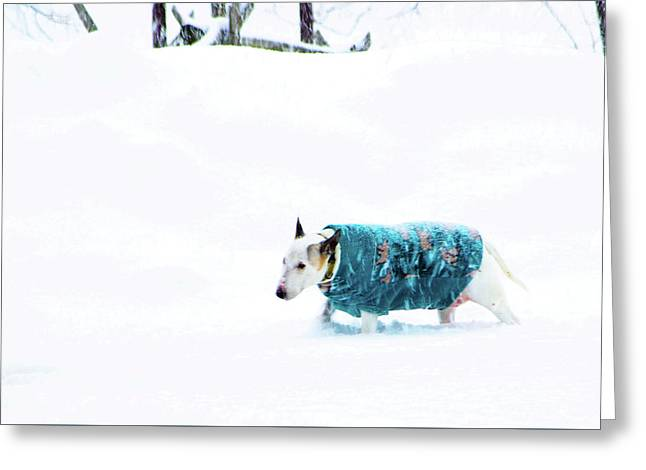 Walk In The Park Greeting Card by Paul Wash