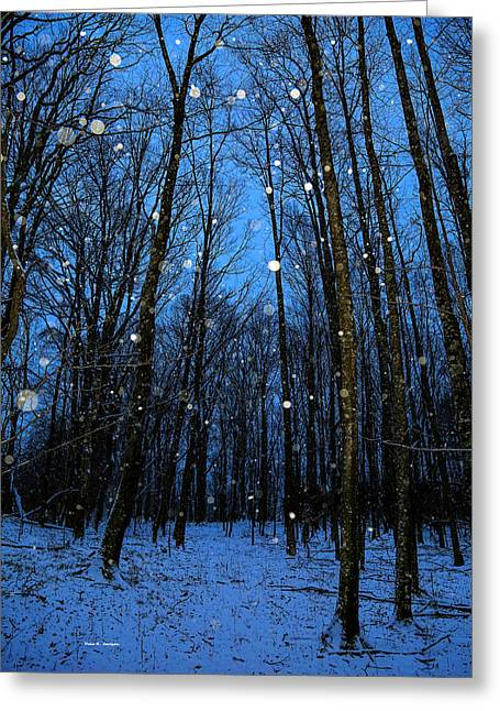 Walk In The Snowy Woods Greeting Card