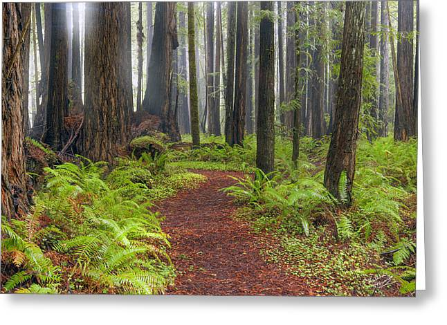 Walk In The Woods 2 Greeting Card by Leland D Howard