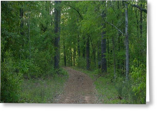 Walk In The Woods Greeting Card by Carla Fionnagain