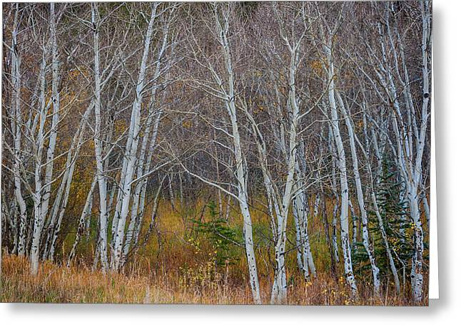 Greeting Card featuring the photograph Walk In The Woods by James BO Insogna