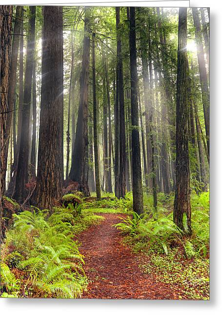 Walk In The Woods Greeting Card by Leland D Howard