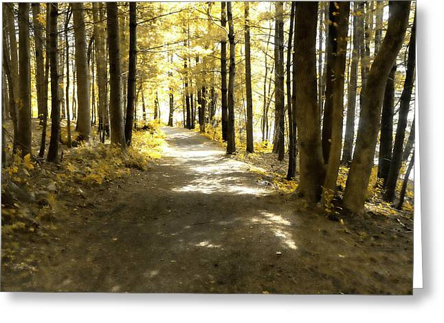 Walk In The Woods Greeting Card by Sharon Popek