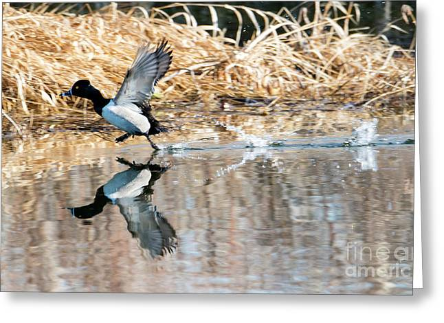 Walk On Water Greeting Card by Mike Dawson