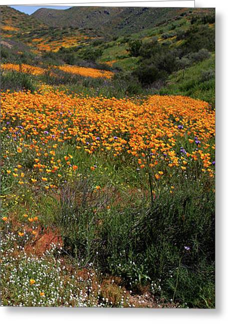Greeting Card featuring the photograph Walker Canyon Poppies by Cliff Wassmann