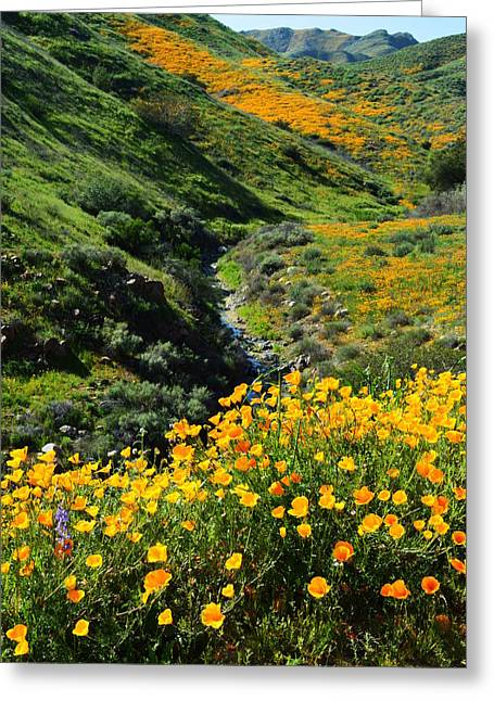 Walker Canyon Vista Greeting Card by Glenn McCarthy Art and Photography