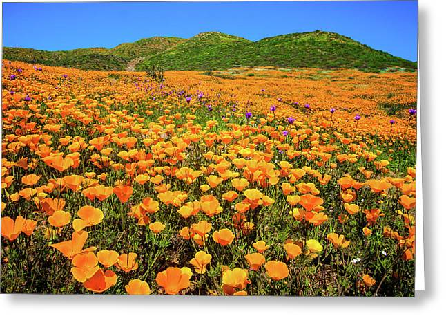 Walker Canyon Wildflowers Greeting Card