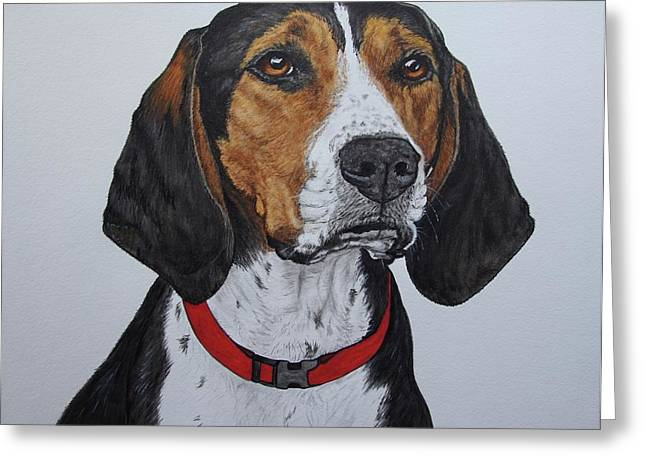 Walker Coonhound - Cooper Greeting Card by Megan Cohen