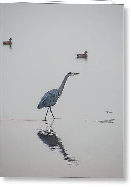 Walking In Calm Waters Greeting Card
