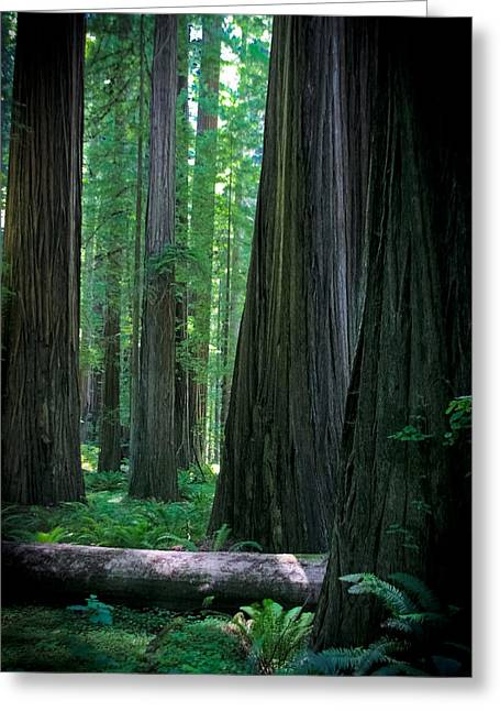 Walking In The Redwoods Greeting Card by Jonathan Hansen