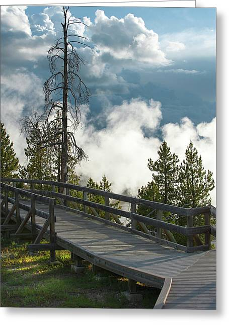 Misty Pine Photography Greeting Cards - Walking Into The Unknown Greeting Card by Sandra Bronstein