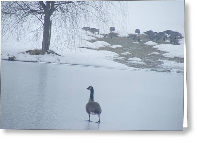 Walking On Water Greeting Card by James and Vickie Rankin