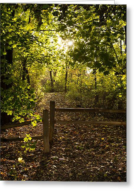 Greeting Card featuring the photograph Walking Path by Mike Evangelist