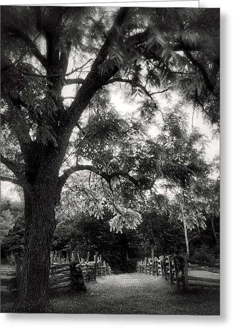 Walking The Path - Arkansas - Pea Ridge Military Park Greeting Card by Jason Politte