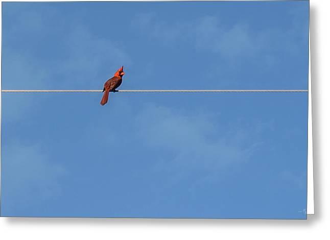 Walking The Tightrope Greeting Card by Mechala  Matthews