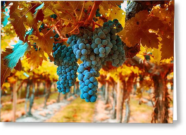 Walking Through The Grapes Greeting Card by Lynn Hopwood