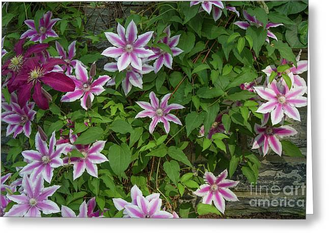 Greeting Card featuring the photograph Wall Flowers by Chris Scroggins
