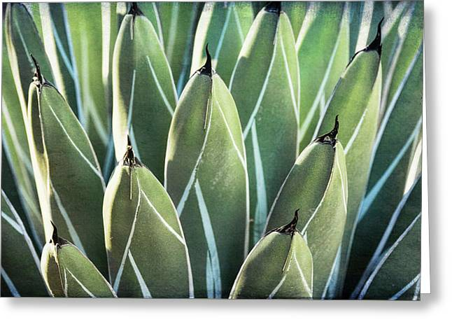 Greeting Card featuring the photograph Wall Of Agave  by Saija Lehtonen