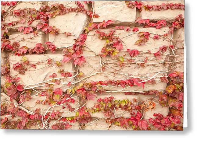 Wall Of Vines Greeting Card by Sheri Van Wert