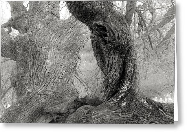 Walnut Tree Detail Greeting Card by Joseph Smith