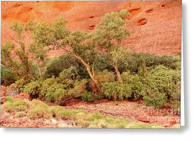 Greeting Card featuring the photograph Walpa Gorge 03 by Werner Padarin