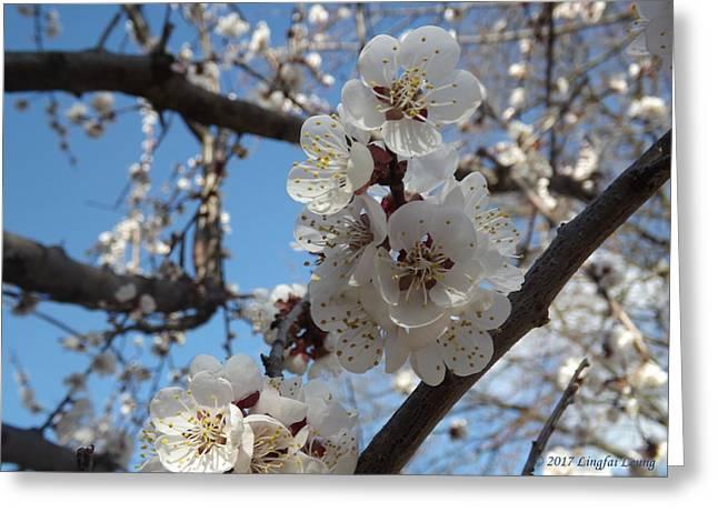 Waltz Of Sugar Plum Blossoms Greeting Card by Lingfai Leung