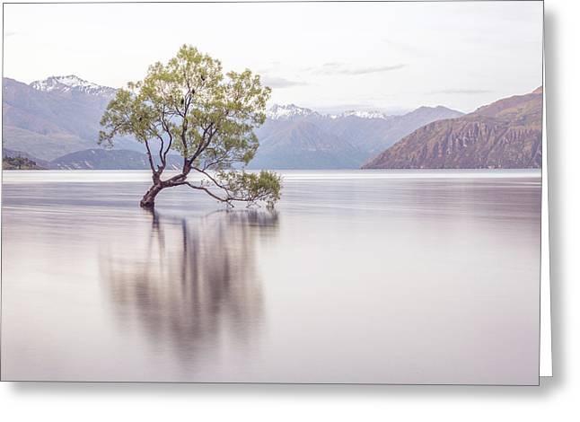 Wanaka Tree Greeting Card by Racheal Christian