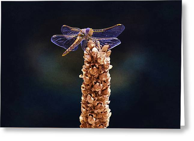 Wandering Glider Dragonfly Greeting Card by Steven Michael