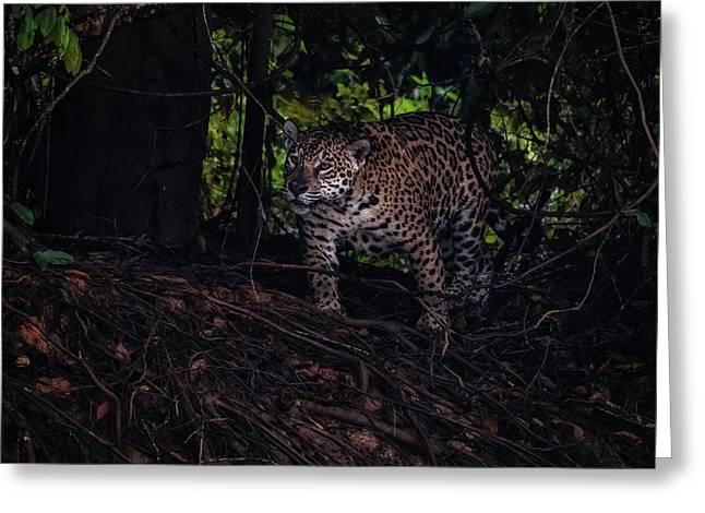 Greeting Card featuring the photograph Wandering Jaguar by Wade Aiken