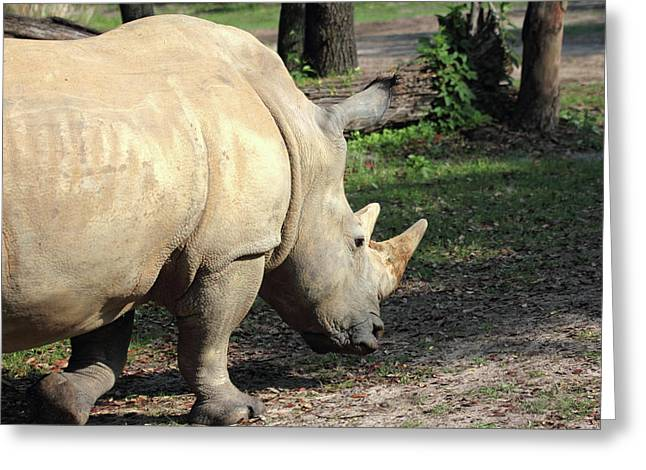 Wandering Rhino Greeting Card by Mary Haber