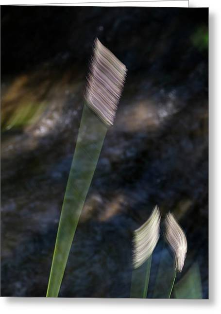 Wands Over Water Greeting Card