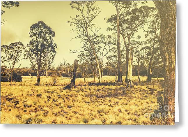 Waratah Tasmania Bush Landscape Greeting Card