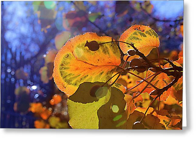 Warm Autumn Day Greeting Card by Kat Besthorn
