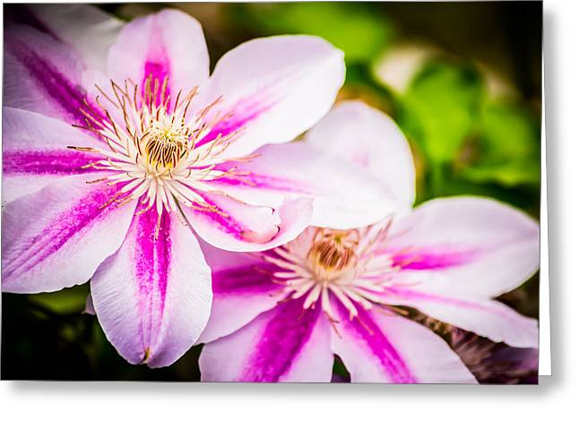 Warm Light And Colors Greeting Card by Shelby Young