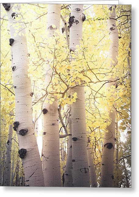 Greeting Card featuring the photograph Warm Gold by The Forests Edge Photography - Diane Sandoval