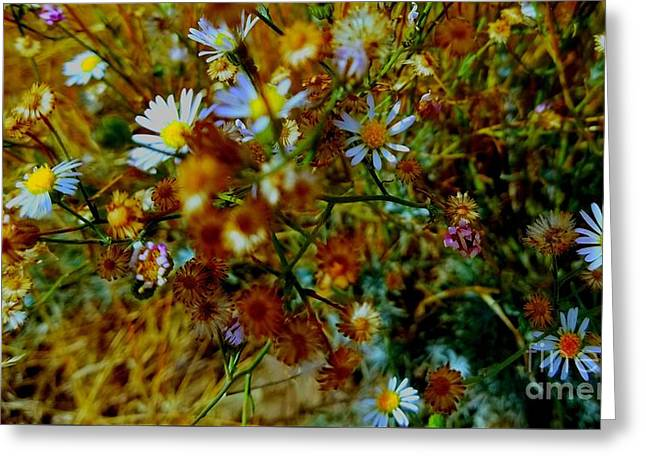Warm  Happy Desert Asters Greeting Card