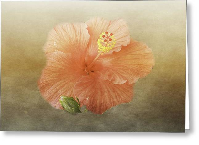 Warm Hibiscus Greeting Card