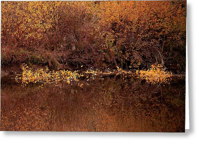 Greeting Card featuring the photograph Warm Reflection by The Forests Edge Photography - Diane Sandoval