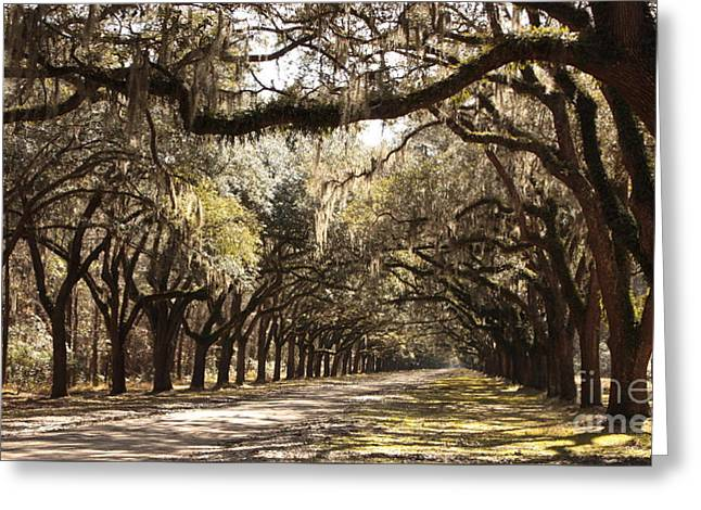 Warm Southern Hospitality Greeting Card by Carol Groenen