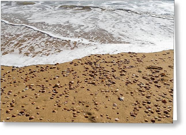 Warm Summary Textures - Seashells Foam And Sand Greeting Card by Georgia Mizuleva