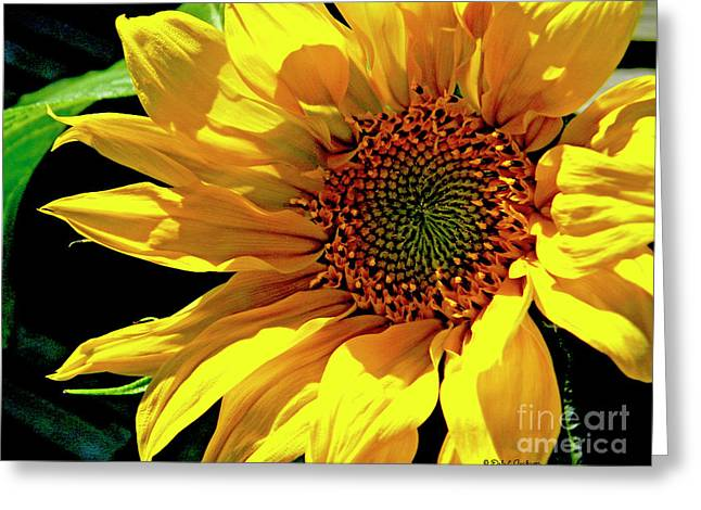 Warm Welcoming Sunflower Greeting Card