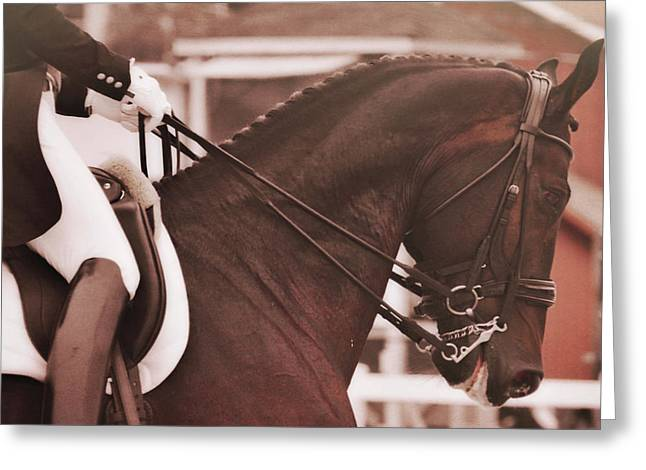 Greeting Card featuring the photograph Warmblood Winner by Dressage Design