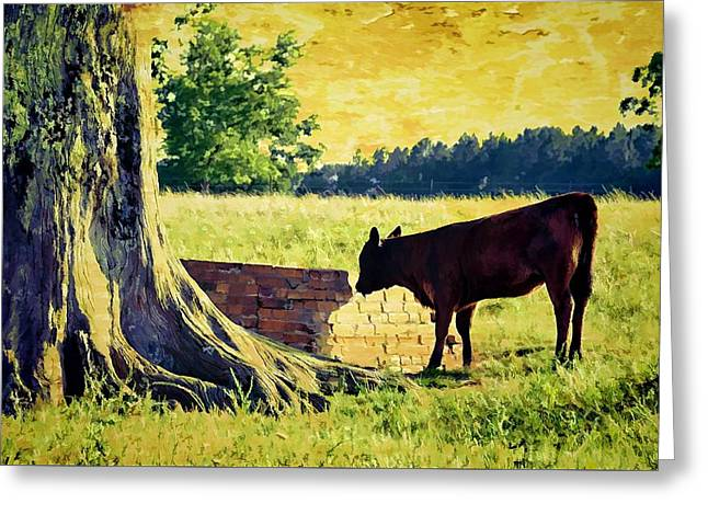 Warming Up In The Morning Glow Greeting Card by Jan Amiss Photography