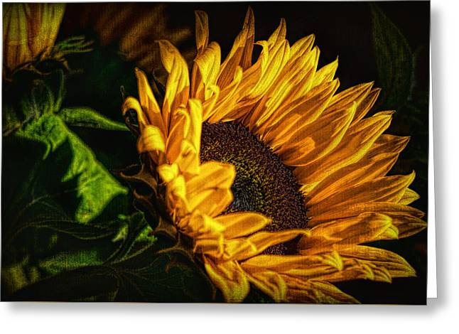 Greeting Card featuring the photograph Warmth Of The Sunflower by Michael Hope